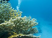Colorful Coral Reef On The Bottom Of Tropical Sea, Yellow Fire Coral, Underwater Landscape poster