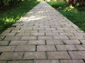 Concrete Footpath Arrangement In The Garden. Sunshine On Pathway With Old Leaf Fallen. poster
