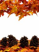 image of pine cone  - Fall leaves with pinecones on white background fall harvest - JPG