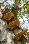 Parasitic Fungi On A Tree Trunk
