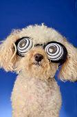 Perro hipnótico