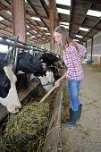 Sorrindo mulher criador dando comida para as vacas