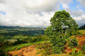 Árbol a lo largo de las montañas
