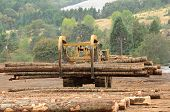 stock photo of conifers  - Large log loader and operations in the log yard at a conifer log mill near Roseburg Oregon