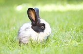 Rabbit bunny baby in green grass in the garden