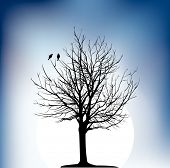 two birds on a tree in night