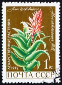 Postage Stamp Russia 1972 Aloe, Medical Plant