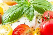 Fresh Capresse Salad