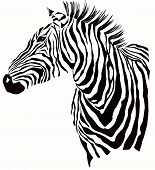 Animal illustration of vector zebra silhouette
