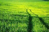 Un campo verde sembrado.