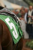 Close Up Of Thoroughbred Horse