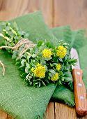 Rhodiola Rosea On The Green Napkin