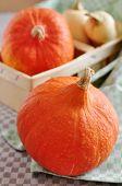 Hokkaido and Butternut Pumpkin