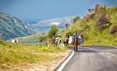 GJIROKSTER, ALBANIA-JUNE 7,2014: Today as before, people on donkeys carry loads in the mountains of