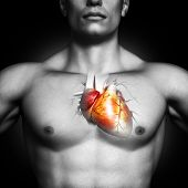 Human heart anatomy illustration of a black and white male on a black background.