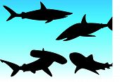 stock photo of great white shark  - These are 4 vector shark silhouettes - JPG