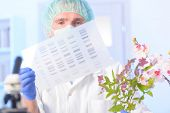 Scientist analizing DNA sequence for GMO experiments with plants