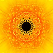 stock photo of kaleidoscope  - Yellow Mandala Concentric Gerber Flower Kaleidoscope Center - JPG
