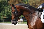foto of horse-breeding  - Bay horse portrait during horse dressage competition - JPG