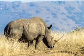 Wildlife Rhino Animal Habitat Africa