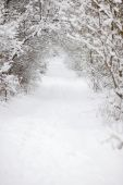 White Snowy Forest Road