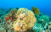 Hard corals and feather stars