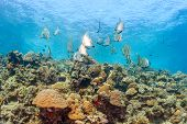 Shoal of fish on a tropical reef