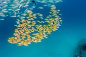 Shoal of fish near a wreck