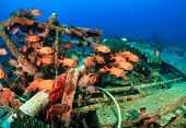 Soldierfish on a wreck
