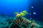 Colorful tropical fish on a wreck