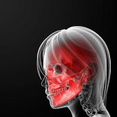 stock photo of mandible  - 3d rendered illustration of the female skull bone  - JPG
