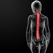 image of spinal disks  - 3d rendered illustration of the female spine bone  - JPG