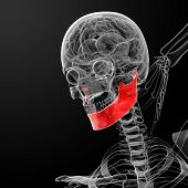 pic of jaw-bone  - 3d rendered illustration  - JPG