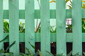 Green garden fence and ornamental plants