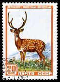 Vintage  Postage Stamp. Axis Deer.