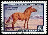 Vintage  Postage Stamp. Wild Przewalski's Horse.