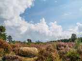 Rock On Hill In Heathland