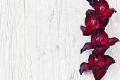 image of gladiolus  - beautiful maroon gladiolus on a light wooden background - JPG