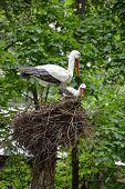 Toys- Stork At The Nest