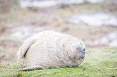 Grey Seals At Donna Nook