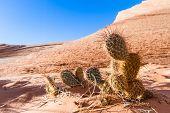 Sandstone Desert