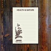 stock photo of nepeta  - Health and Nature Collection - JPG