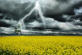 thunderstorm in yellow field