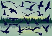 illustration with gull collection on landscape background