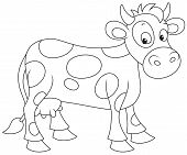 picture of color spot black white  - Spotted white and black cow - JPG