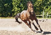 stock photo of beautiful horses  - Beautiful horse making a gallop in ranch