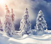Majestic winter landscape glowing by sunlight. Dramatic wintry scene. Carpathian, Ukraine, Europe. Beauty world. Retro filter. Instagram toning effect. Happy New Year!