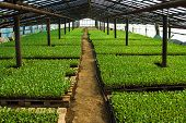picture of greenhouse  - Organic greenhouse - JPG