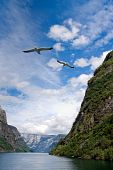 View Inside A Fjord With Motion Blurred Gulls