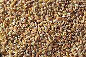 picture of oats  - Raw Organic Steel Cut Oats in a Bowl - JPG